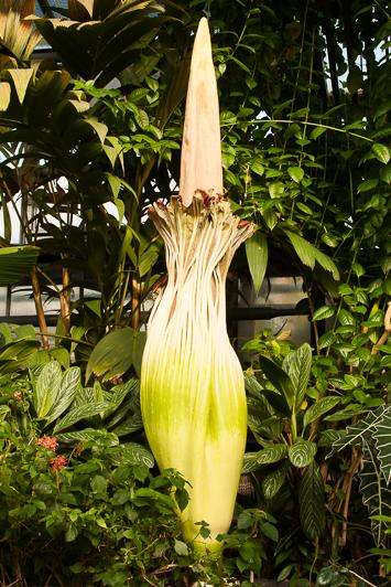 20140612-8716-ML*-Botanischer Garten